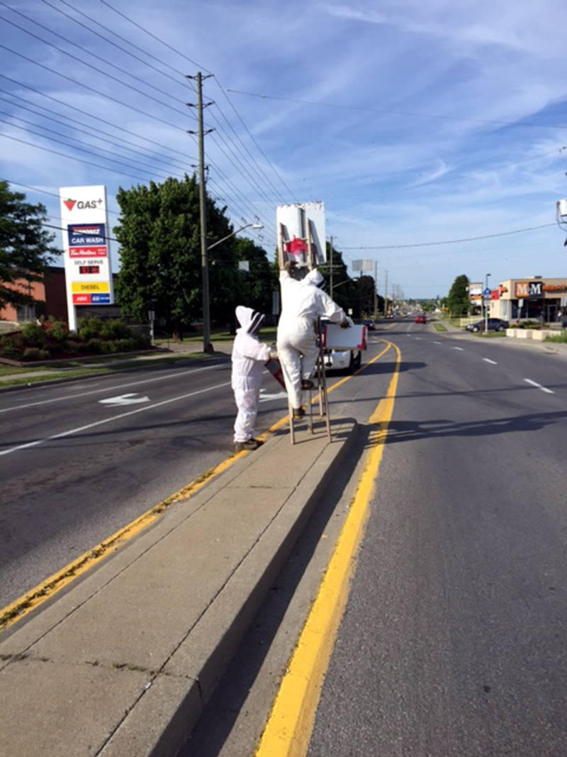 In this Saturday, June 18, 2016 photo provided by Brockville police, a beekeeper and his assistant capture the queen from a sign on Parkedale Avenue. The swarm generated a number of calls to local police. (BPS via Newswatch Group)